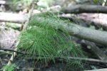 plant