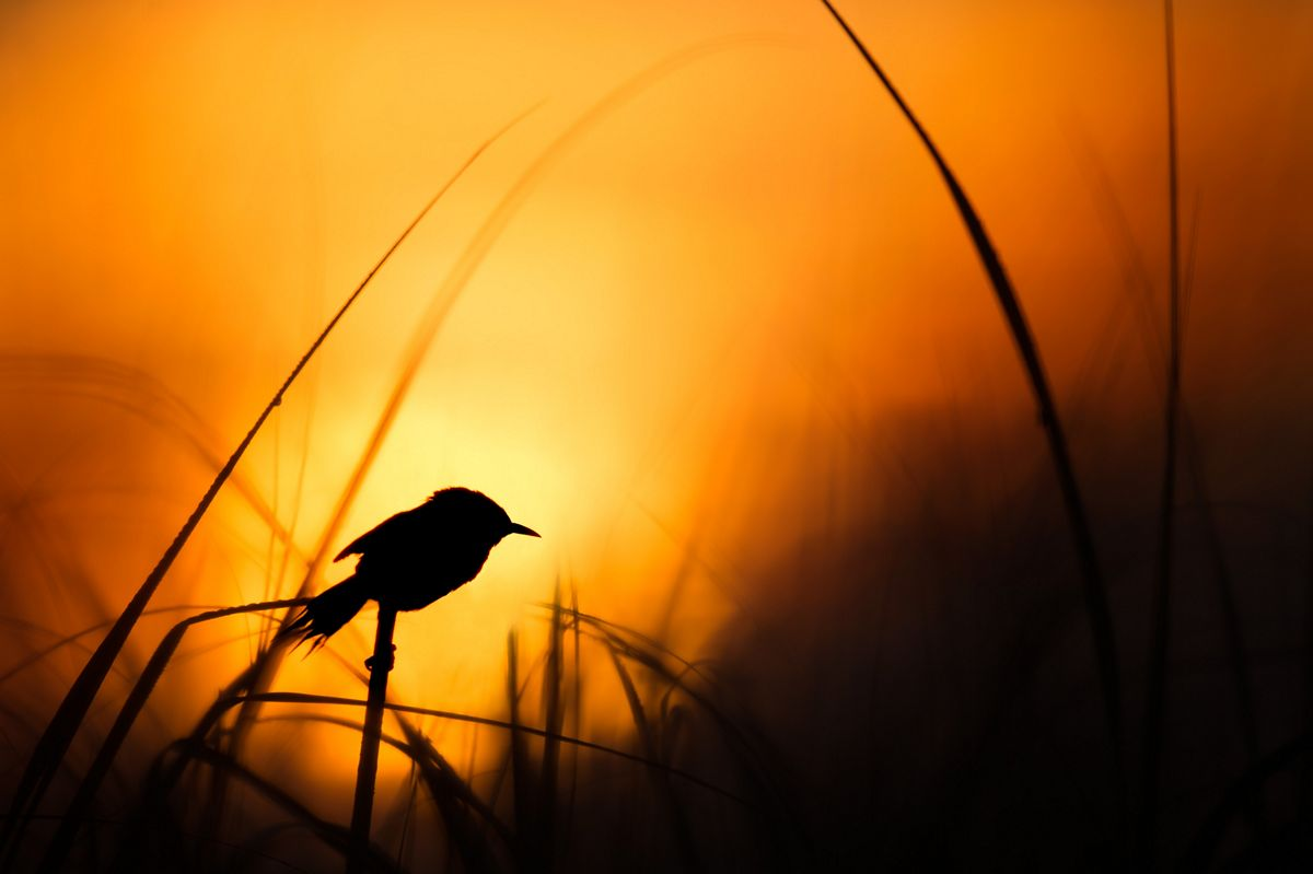 sunset-behind-bird